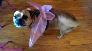 When you have dogs and daughters, a puggle with fairy wings is inevitable.